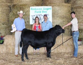 Grand Champion Bred-and-owned Bull
