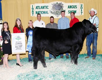 Reserve Late Spring Bull Calf Champion
