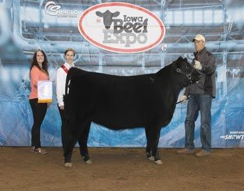 Reserve Senior Heifer Calf Champion