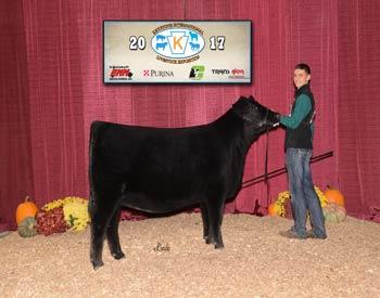 Owned Reserve Intermediate Champion Heifer