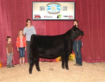 Owned Reserve Senior Heifer Calf Champion