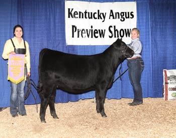 Reserve Early Senior Heifer Calf Champion