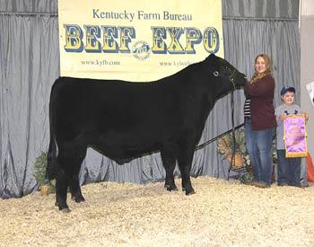 Champion Junior Owned Bull