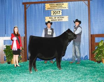 Reserve Winter Heifer Calf Champion