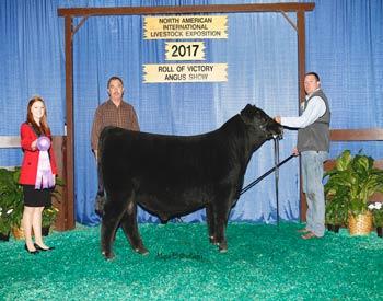 Winter Bull Calf Champion