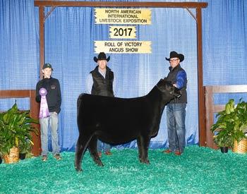 Spring Heifer Calf Champion