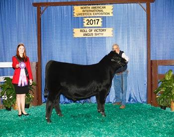 Spring Bull Calf Champion