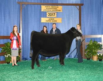 Owned Intermediate Champion Heifer