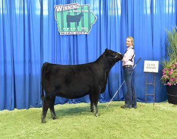 Owned Heifer Class 18