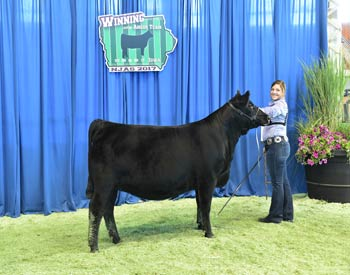 Owned Heifer Class 27