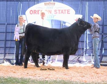 Reserve Senior Champion Female