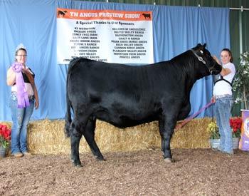 Junior Champion Heifer