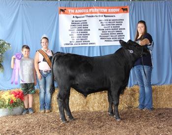 Intermediate Champion Bull