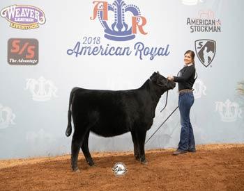Owned Junior Heifer Calf Champion