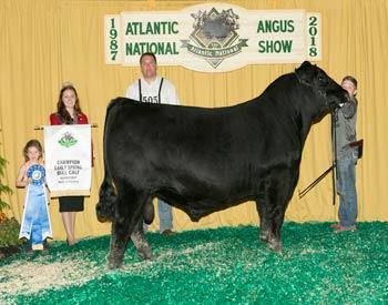 Early Spring Bull Calf Champion