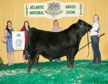 Reserve Late Spring Bull Calf Champion