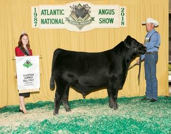 Summer Bull Calf Champion