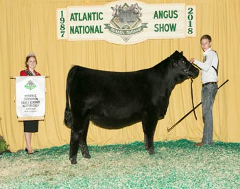 Reserve Early Summer Heifer Calf Champion