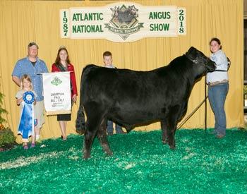 Fall Bull Calf Champion