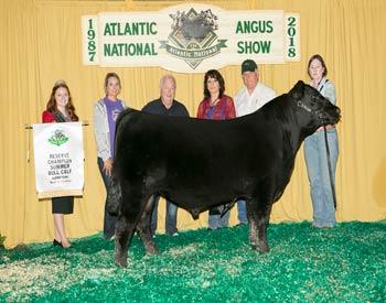 Reserve Summer Bull Calf Champion