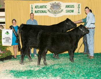 Bred-and-owned Senior Champion Female