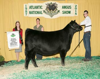 Owned Reserve Early Spring Heifer Calf Champion