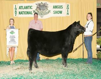 Owned Reserve Summer Heifer Calf Champion