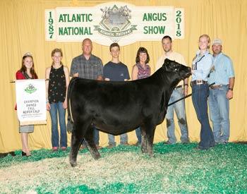 Owned Fall Heifer Calf Champion