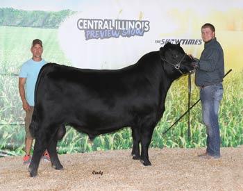 Reserve Junior Champion Bull