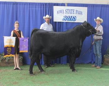 Grand Champion Bull