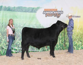 Bred-and-owned Reserve Intermediate Champion Bull