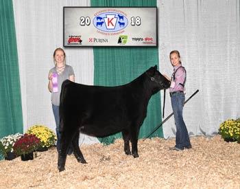Junior Heifer Calf Champion