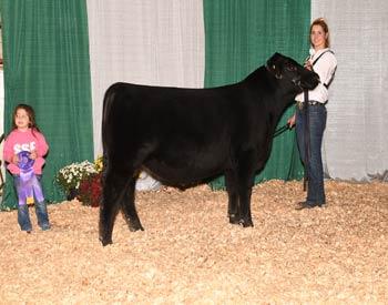 Junior Bull Calf Champion