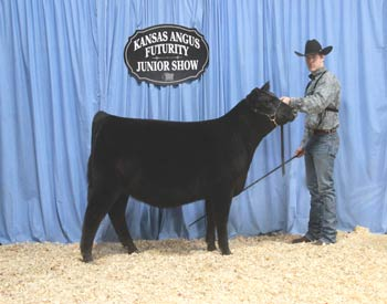 Bred-and-owned Reserve Junior Heifer Calf Champion