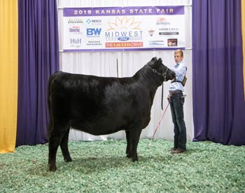 Grand Champion Bred-and-owned Female