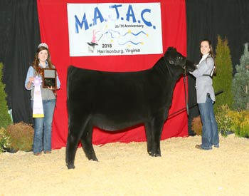 Bred-and-owned Reserve Intermediate Champion Heifer