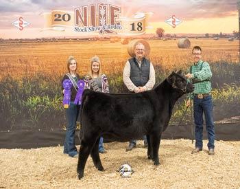 Late Junior Heifer Calf Champion