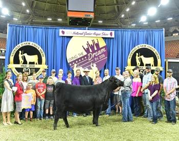 Reserve Senior Heifer Champion