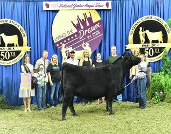 Reserve Late Senior Heifer Champion