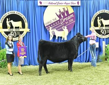 Owned Junior Champion Heifer--division 5