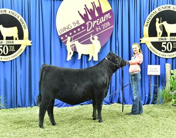 Bred-and-owned Heifer Class 10