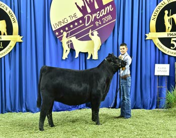 Bred-and-owned Heifer Class 6