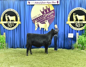 Owned Heifer Class 9