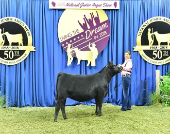 Owned Heifer Class 3
