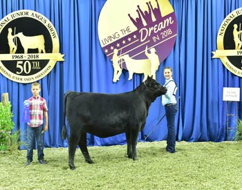 Bred-and-owned Heifer Class 4