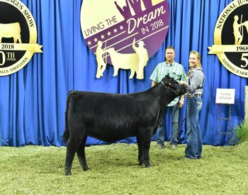 Owned Heifer Class 12
