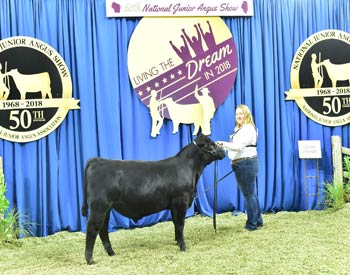 Bred-and-owned Bull Class 1