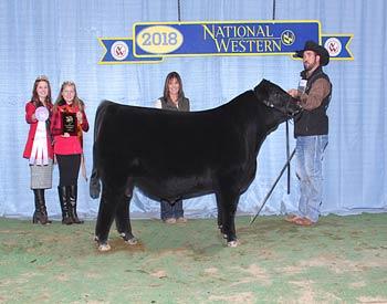 Reserve Winter Bull Calf Champion