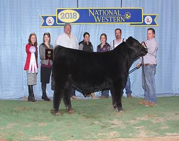 Reserve Spring Bull Calf Champion