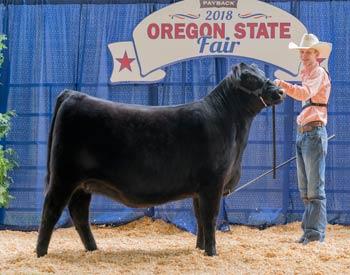 Owned Junior Champion Heifer